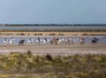 balade-cheval-plage-camargue-auberge-cavaliere-du-pont-des-bannes (41)