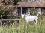 faune-auberge-cavaliere-du-pont-des-bannes (38)