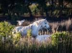 faune-auberge-cavaliere-du-pont-des-bannes (6)
